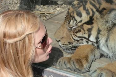 Närmare än så här kommer jag nog aldrig en tiger.