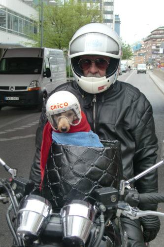 Var bara tvungen att ta en bild på den här söta hunden med hjälm och glasögon som åkte bakom oss.