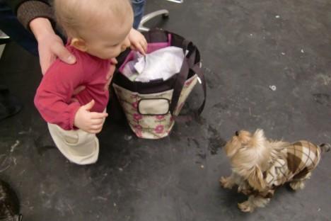 Liv fick hälsa på salongens lilla maskot hunden Tuva. Tuva ville mest åt Livs barnmat och komma undan hennes nypor.
