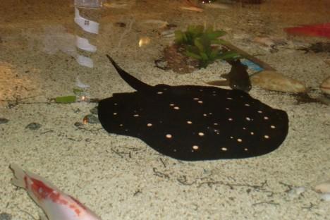 En rocka simmade förbi oss vid bordet.