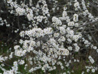 Dagens lååånga promenad har varit underbar. Det doftar så gott från alla vackra träd som står i blom. Solen har varit jättestark. Trots hög solskyddsfaktor är jag helt fläckig. Måste leta fram Grard-bilden på mig från min och Peters smekmånad. Så du får skratta lite. Ikväll kommer den!