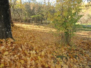 Nu börjar träden tappa dina löv, och kylan har kommit bara över en natt tycker jag.