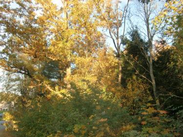 Solen tittade fram mellan trädkronorna. Åh, vad jag tycker hösten är vacker när den är så här.