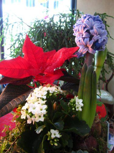 Doften från en hyacint är verkligen jul för mig.