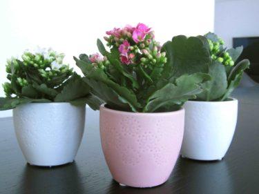 Jag köpte inte bara stärgrejer på ICA utan och tre mini-blommor. Varför tycker jag allt som är litet är så sött.