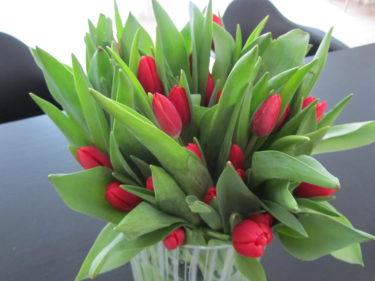 Ville även ha en färgklick hemma. Så jag köpte röda tulpaner som snart kommer blomma ut och bli så vackra.