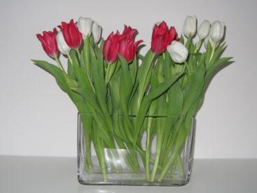Köpte ev avlång enkel vas på IKEA som nu pryds av vackra tulpaner. Fins va?