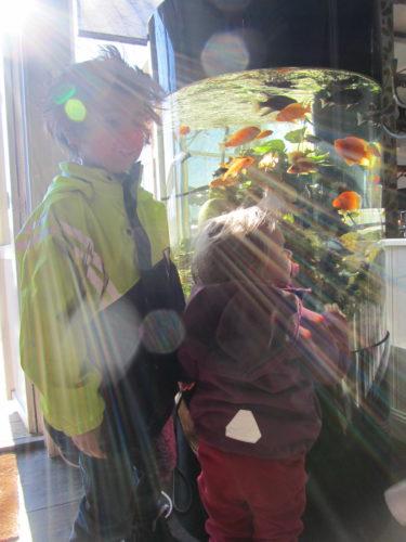 Solen sken. Ett akvarium gjorde brunchen lugnare.