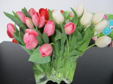 Peter får njuta av vackra tulpaner och kärleksbrev.