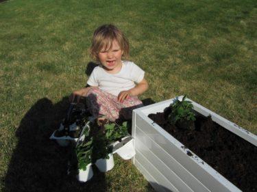 Liv och jag har planterat jordgubbar, smultron, morötter och sallad.