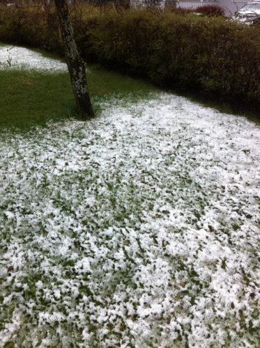 Så här tråkig var marken igår. Jag älskar i och för sig snö men INTE i maj.