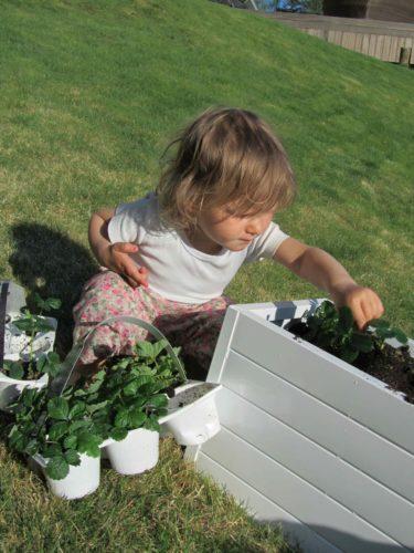 Liv var duktig men gillade inte när hon fick jord på händerna. Tror jag måste köpa trädgårdshandskar till primadonnan.