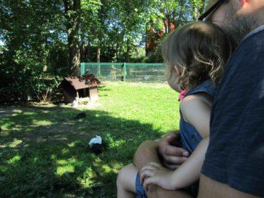 Tyvärr fick barnen inte klappa kanierna och katterna längre. Det somvar tråkigt också var att björnarna, Babianerna och flera andra djur inte syntes till. De var nog någon annanstand