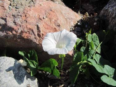 Hittade istället en vacker, ensam blomma bland stenarna.