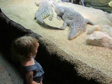 Krokodiler och hajar får mig att rysa. Det stod om en jättekrokodil som hittats och dödads i Afrika och när de skar upp magen fann de en hel get, massor av smådjur och en hel och fulls påklädd kvinna. Huvva! Nu reste jag ragg igen.
