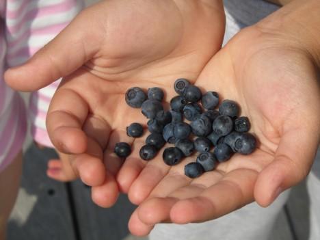 Idga hittade vi i alla fall blåbär. massor av dem dessutom. Precis bakom huset :-) i vår lilla skog.