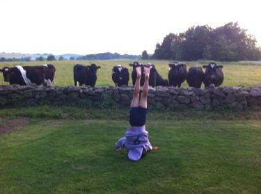 När vi kom upp till huset samlades alla kossor vid muren när de såg Mio göra konster, stå på huvudet och hjulade.