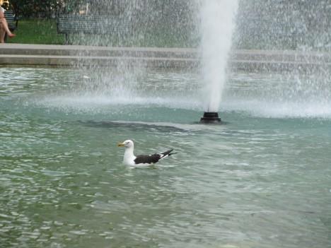 Det var fler än Liv som ville bada i fontänen.