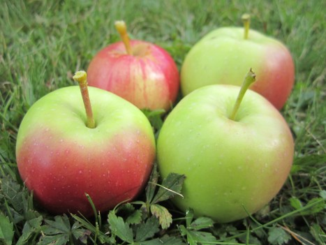 Idag ska jag och Liv baka äppelmuffins med äpplena. Kanske en god smuldegspaj också. Sitter du och trycker på ett bra recept så dela gärna med dig.